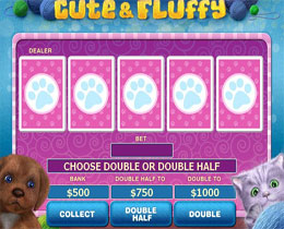 Cute and Fluffy Gamble Screen