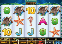 Screenshot of Dolphin Reed Slot from Playtech